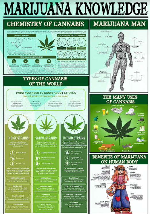 Marijuana knowledge poster 3