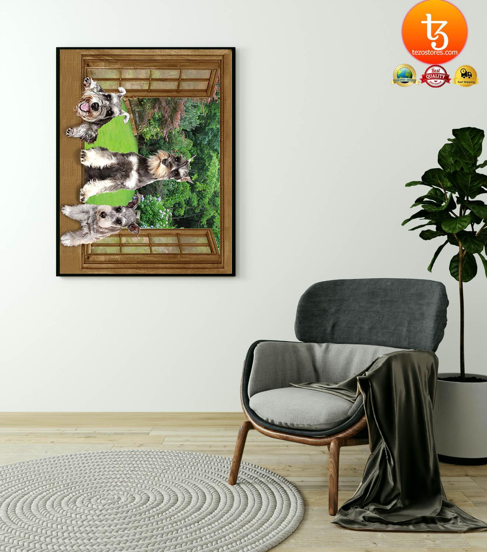 Schnauzer dog view window poster 4