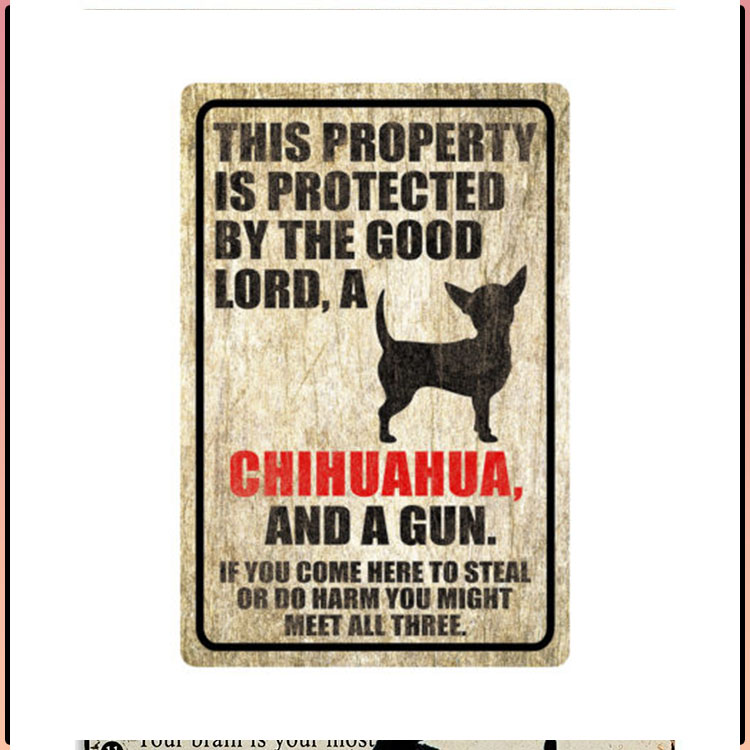 Chihuahua This Property Is Protected By The Good Lord A Chihuahua And A Gun 3